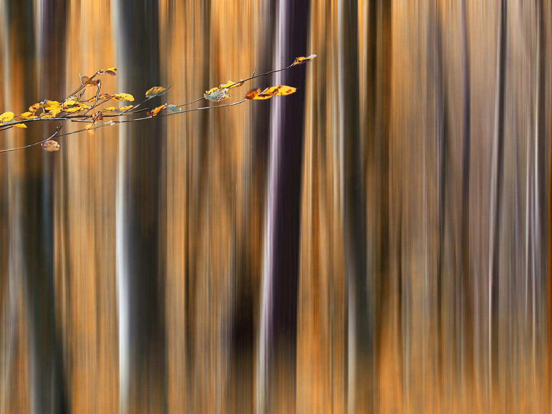 RE: Wald.Spielerei II