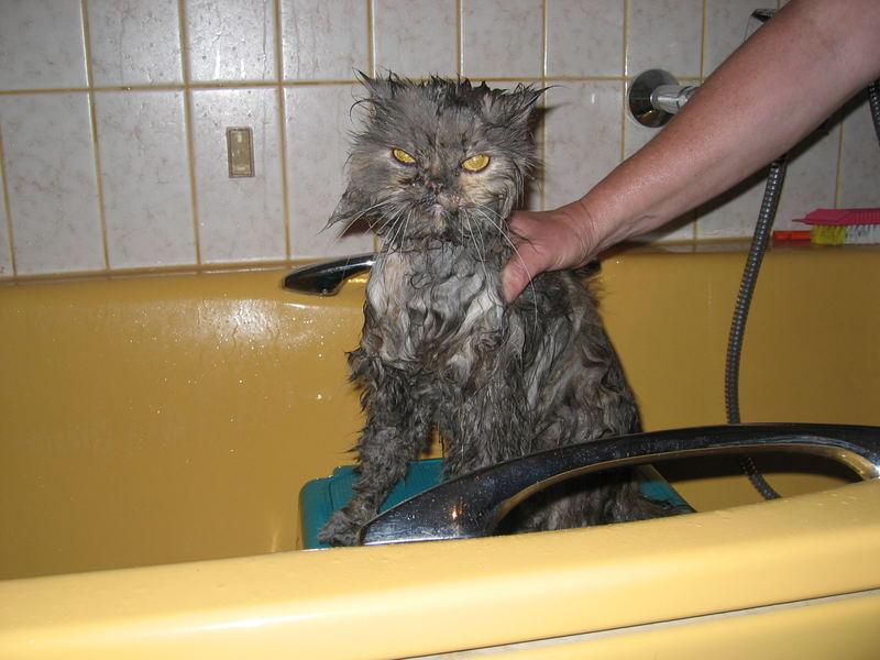 really wet cat