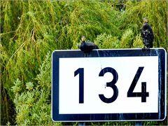 ... REB 129 ...