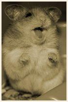 *Rebel Hamster*