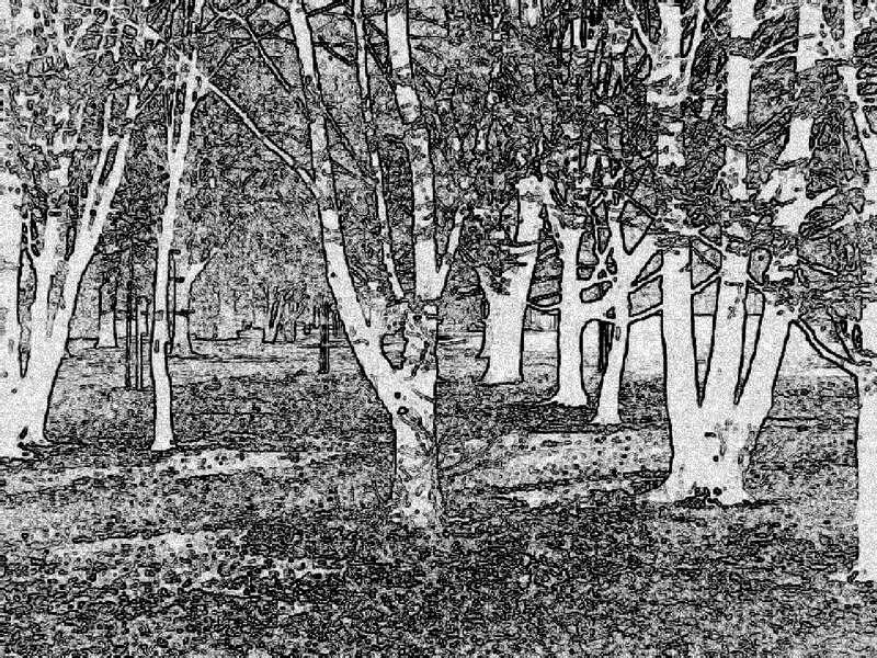 Rechts 'n Baum, links 'n Baum, .... (Bearbeitung)
