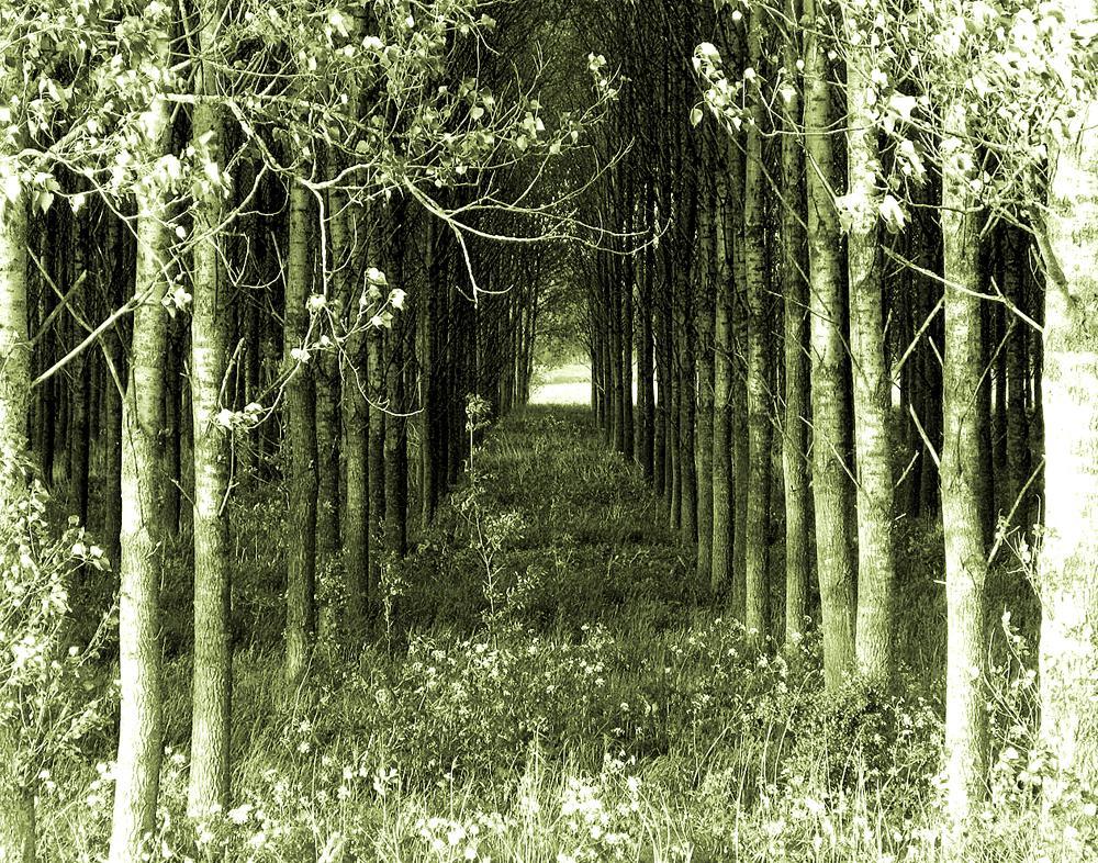 Rechts sind Bäume, links sind Bäume....
