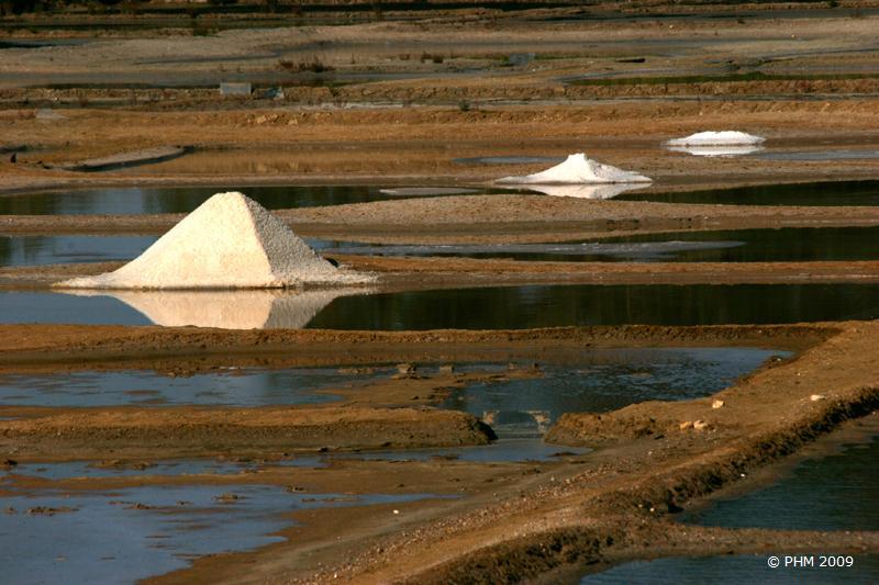 Récolte au Port des Salines