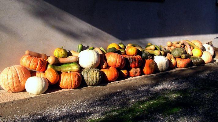 Recolte d'automne