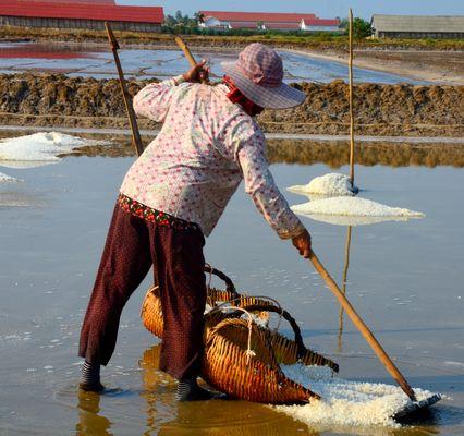 Récolte du sel