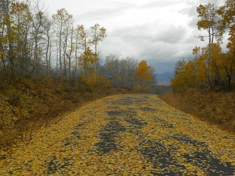 Recordado los caminos Otoñales. Imagen & Foto   paisajes, campo ...