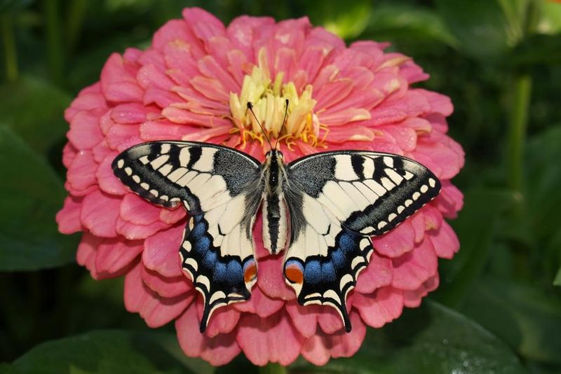 recuerdo a flor de verano