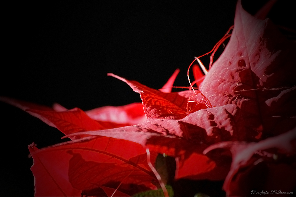 - red -