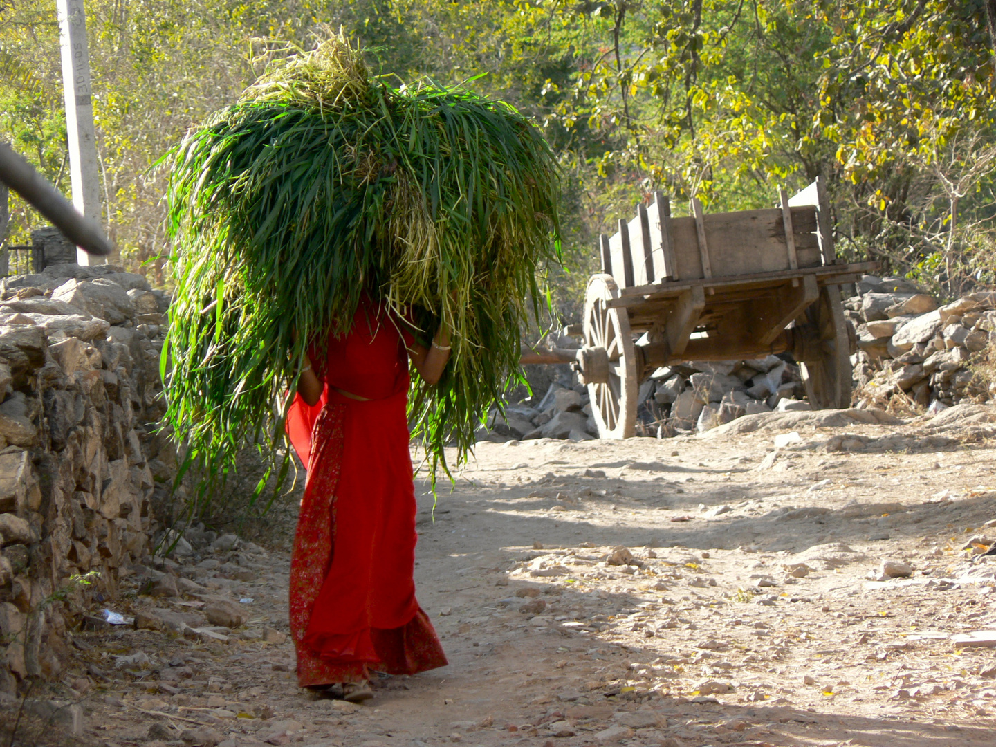 Red and Green in a Village near Udaipur