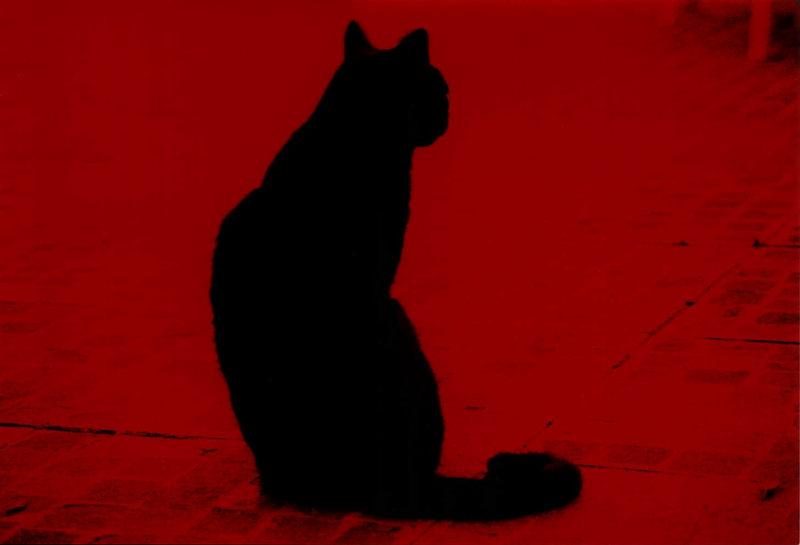 red black cat