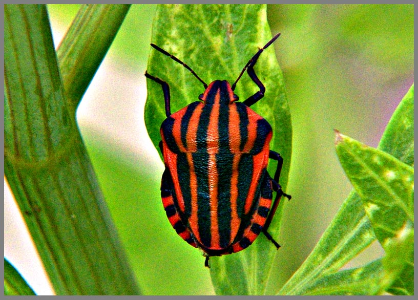 red bug in green