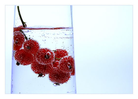 [red currant]