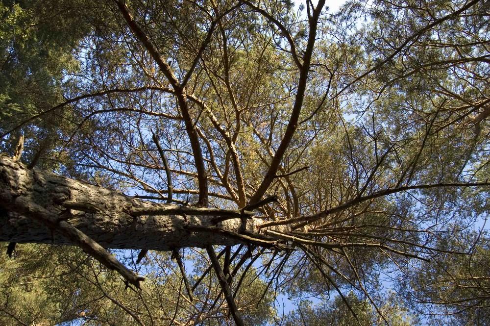 Red de ramas