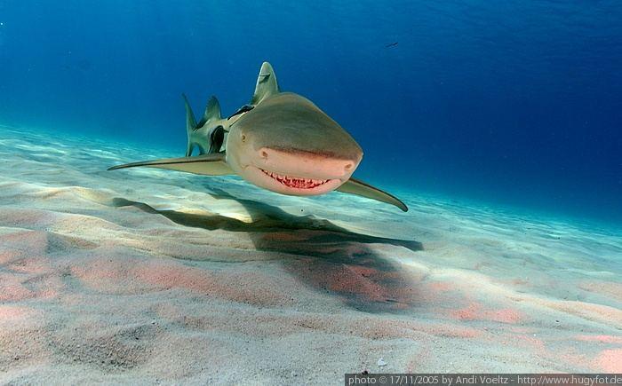 Red Lips - Zitronenhai im Anflug