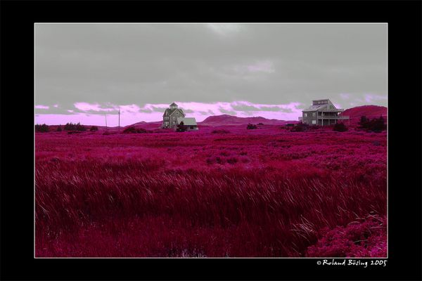 ---red lush meadows---