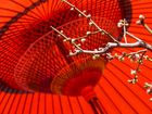 Red parasol and plum blossom