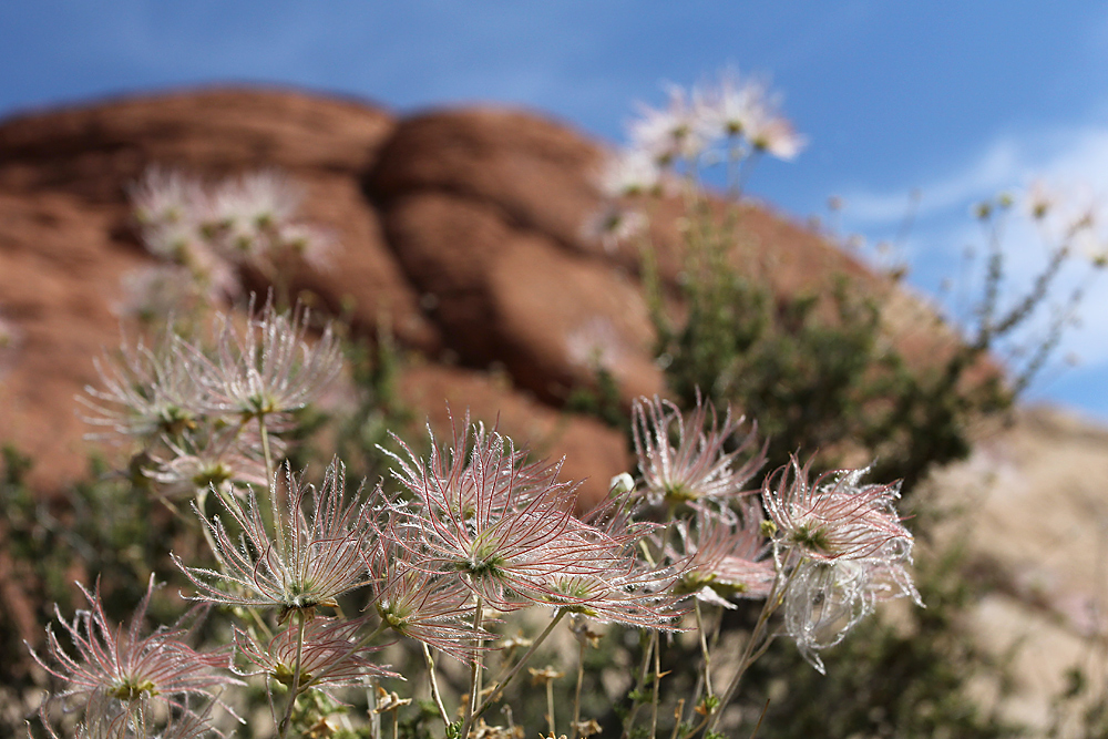 Red Rock Canyon (4)