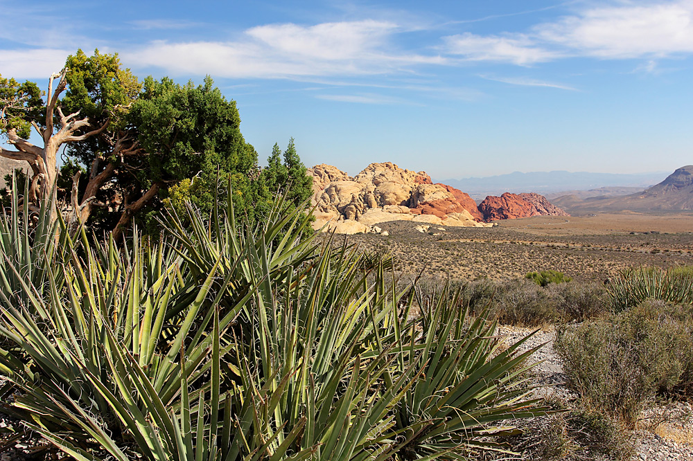 Red Rock Canyon HDR (7)