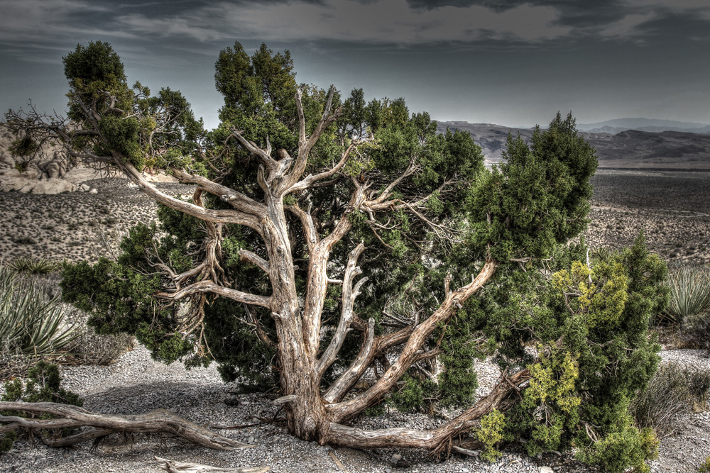 Red Rock Canyon HDR (8)