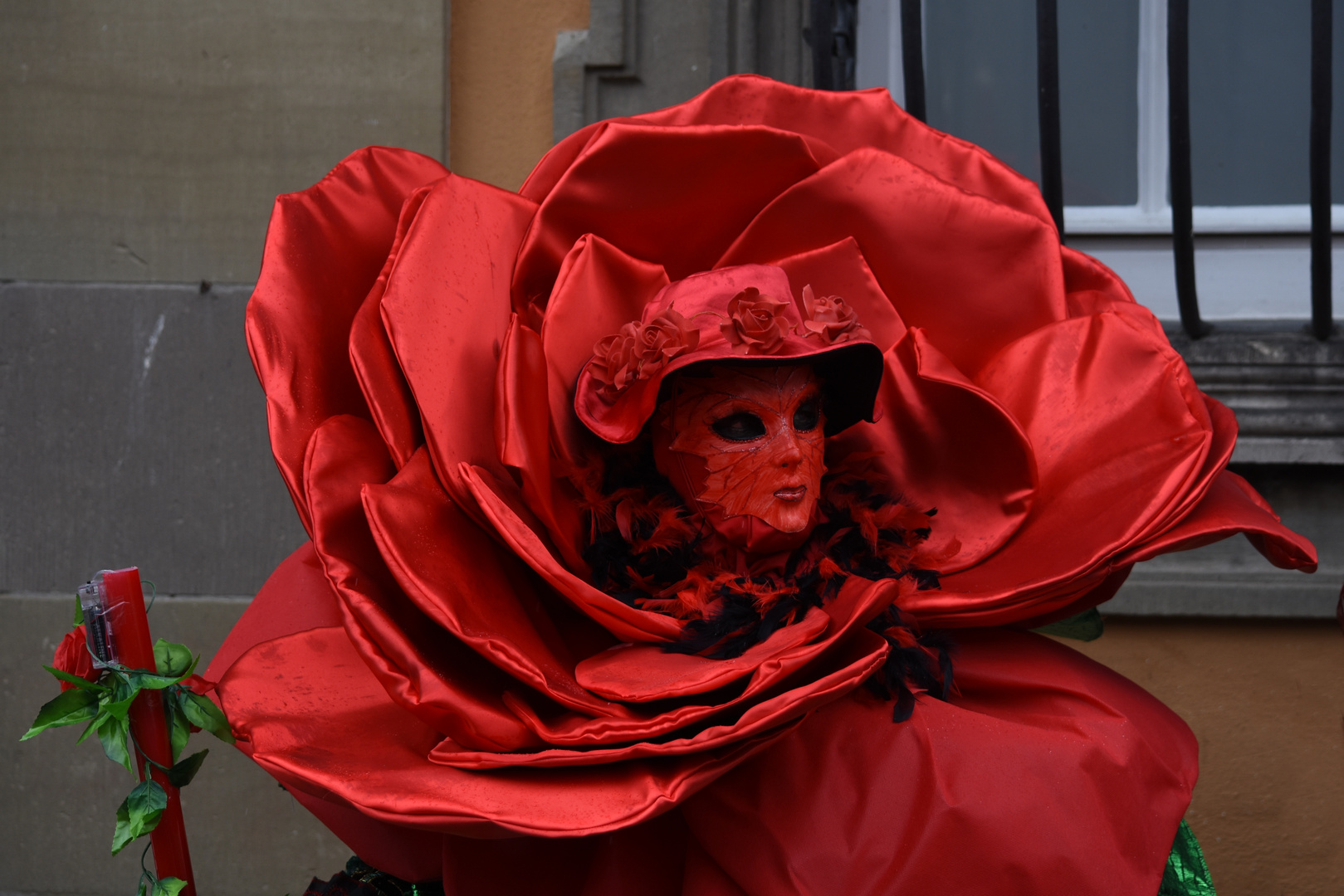 """ red rose """