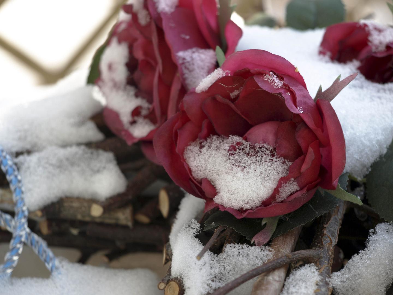 Red roses - white snow