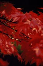 RED - roter Glanz