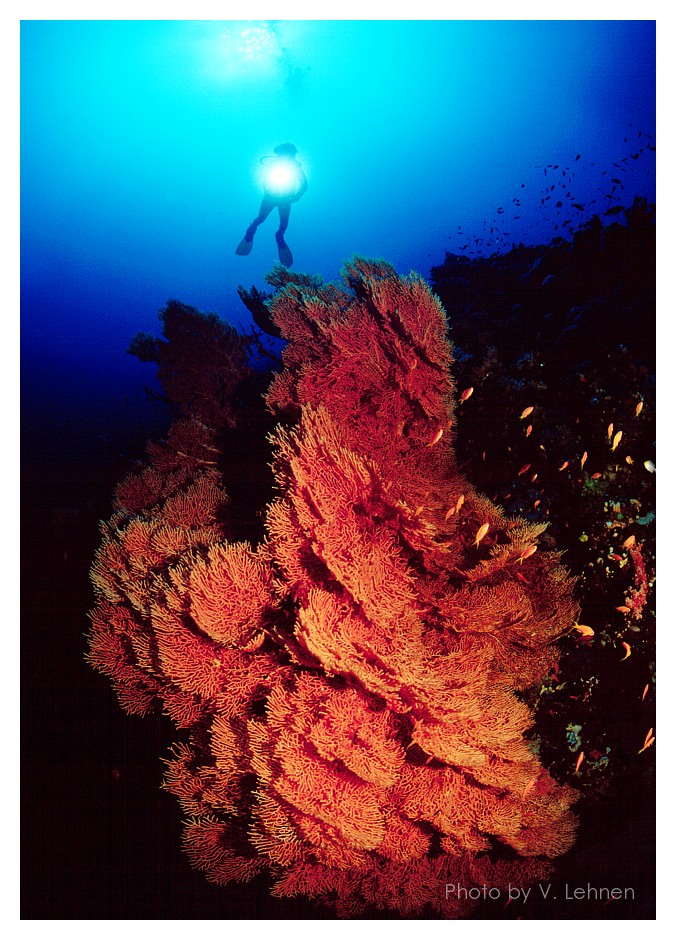 Red Sea Adventure
