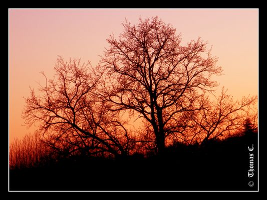 Red sky on the tree