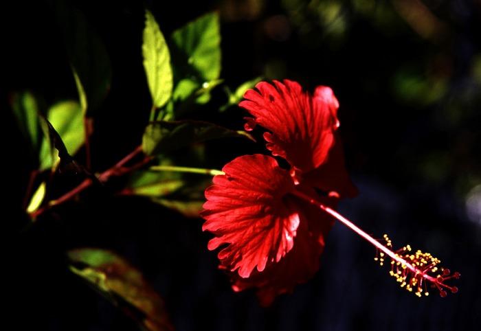 red spot in the dark