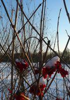 Red-White Berries