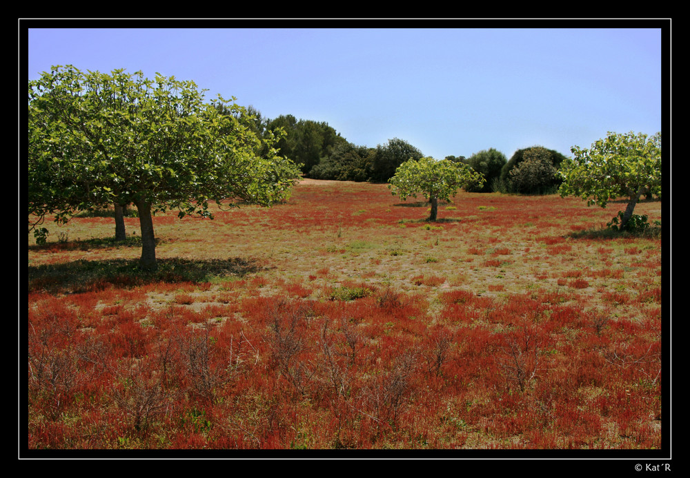 Redgras