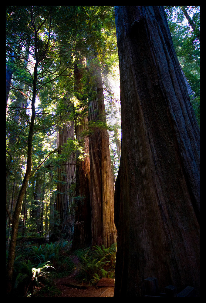 Redwoods, Jedediah Smith Redwoods State Park