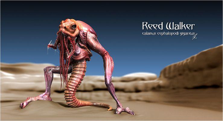 Reed Walker