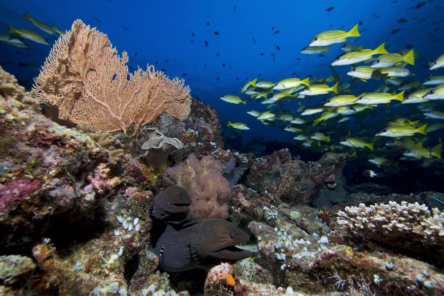 Reef Life II