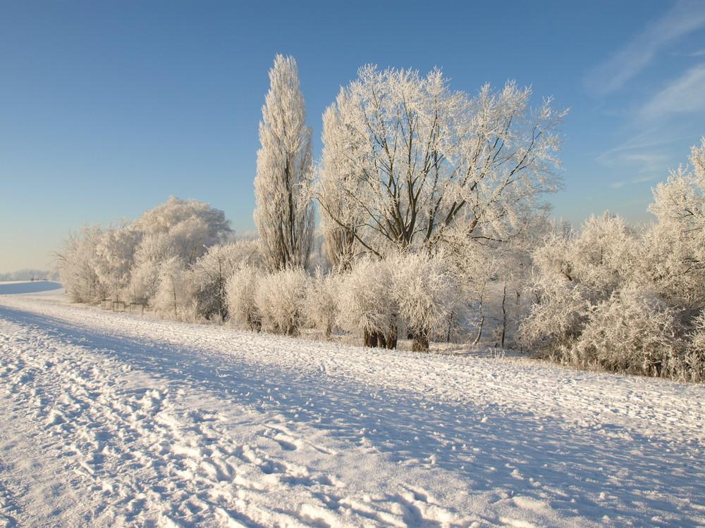 Reeser Deichblick im Winter