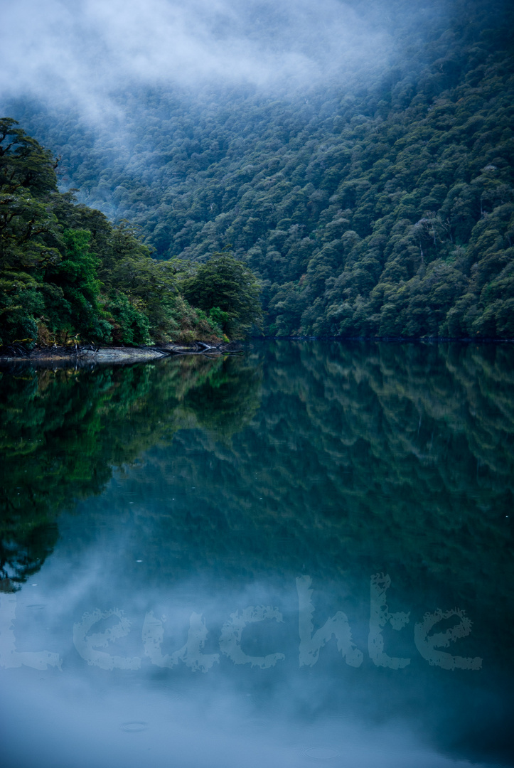 reflection in the sounds NZ