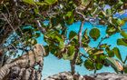Reflective Iguana