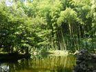 Reflejo de bambu