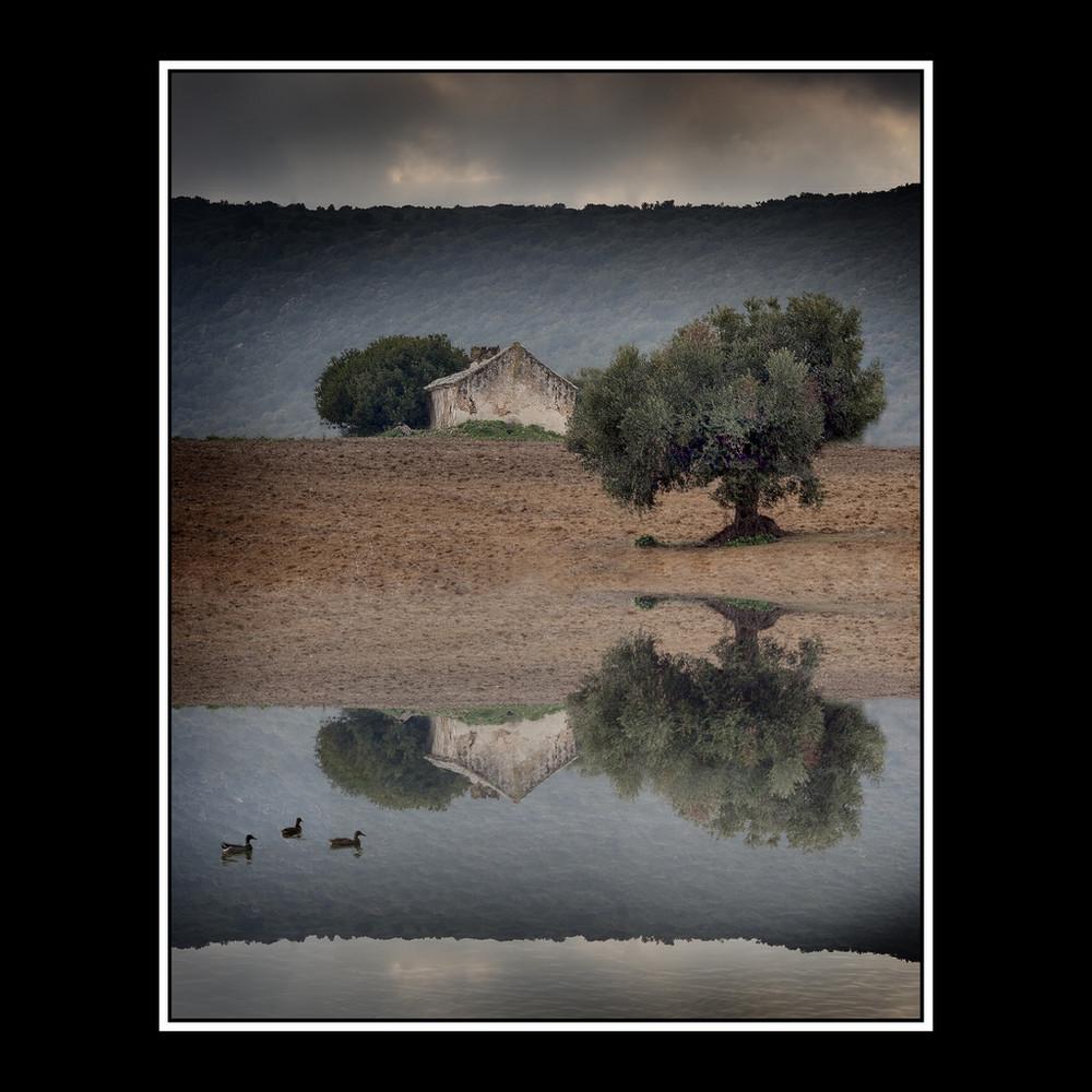Reflejo y patos
