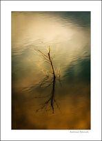 Reflejos en el agua (3)