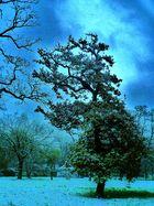 Reflet bleu sur l'arbre...