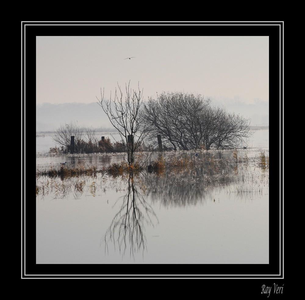 reflet dans les marais