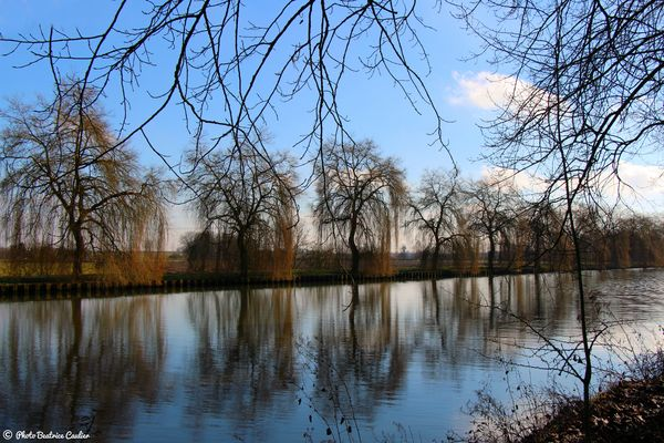 Reflet d'arbres