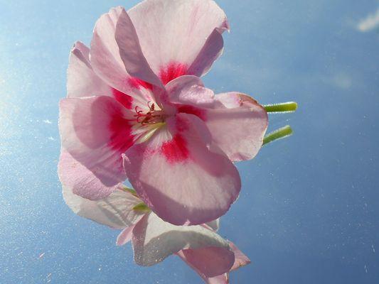 Reflet de fleur