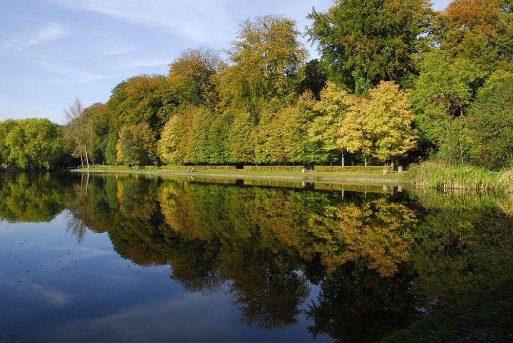 Reflet des arbres dans l'étang.