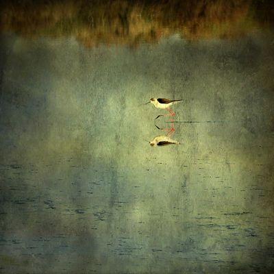 reflet d'oiseau