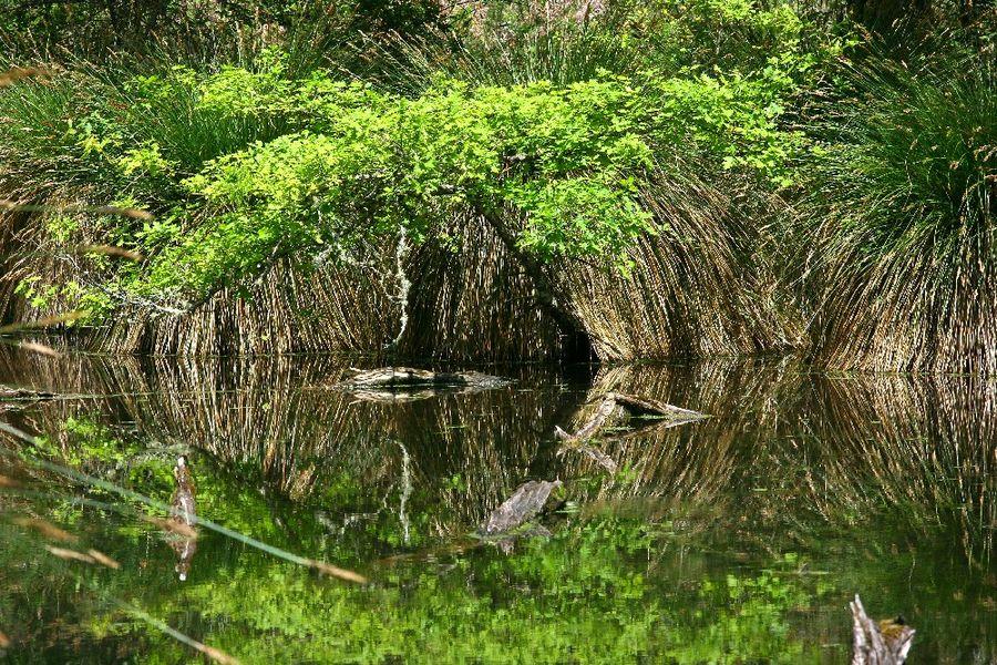 Reflet d'un arbre à la surface de l'eau.