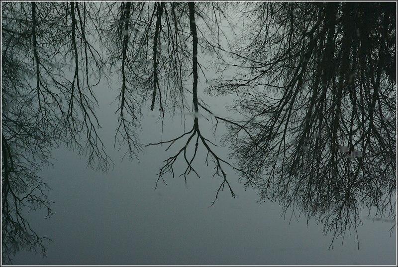 Reflet hivernal