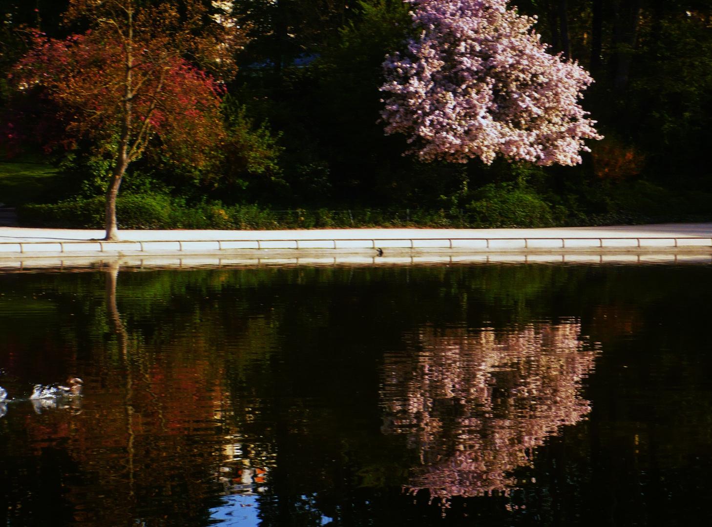 Reflet sur le lac...