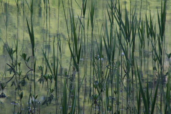 Reflets dans un Lac du Jura